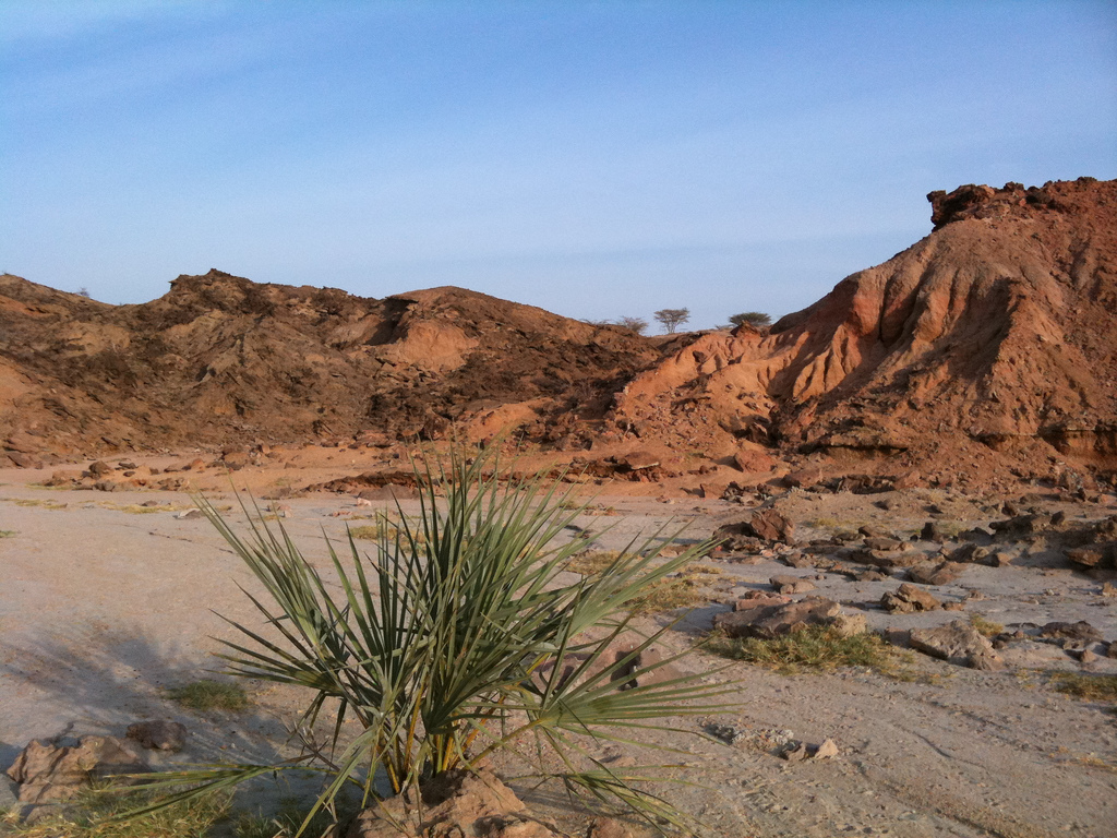 Fossil exposures near TBI's Turkwel research facility, on the west side of Lake Turkana