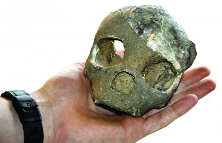 A Late Pleistocene cranium of a young Homo sapiens.