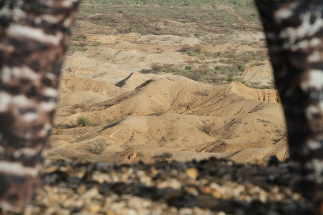 A view of the fossil bearing beds of are 40