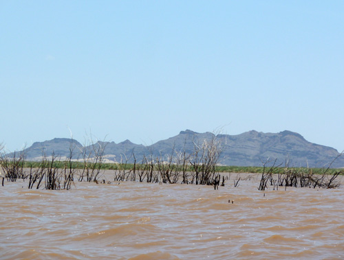 Prosopis dying at the mouth of the delta looking towards Lothagam