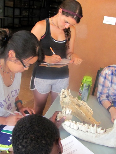 Luisa and Lorraine write down notes on teeth morphology.