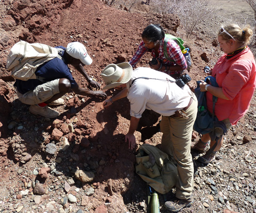 Francis, Zack, Vaishanavi and Kathleen document the ancient tusk