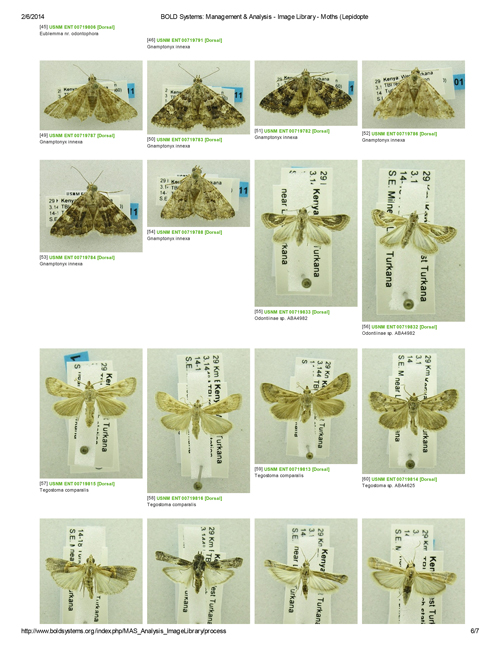 A few of the Turkana moths in the BOLD database