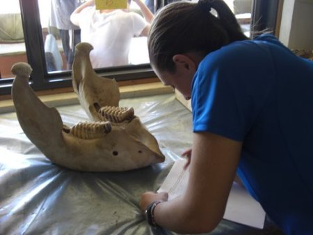 Maggie gets a closer look at the elephant mandible.