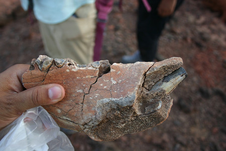 At the end of the day, Sam finds a hippo mandible.