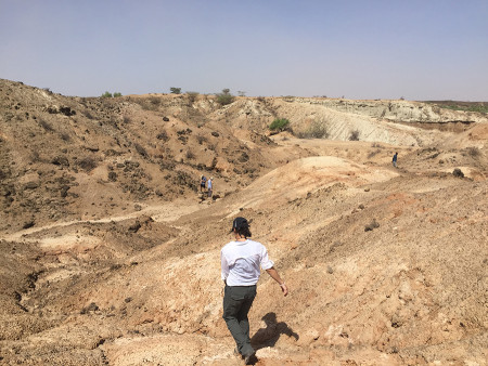 Jayde carefully walks across the survey area in search of fossils.