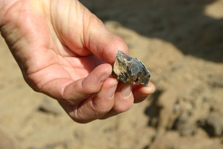 Dr. Fortelius finds a fossilized tooth fragment that belonged to a rhino.
