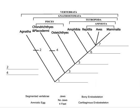 vert_cladogram copy