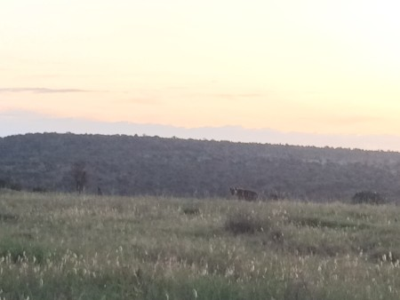 Can you spot the hyena?