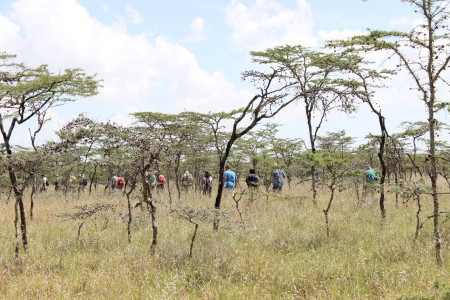 The students hike through the black cotton environment to study its vegetation composition and coverage with Mr. Ndung'u.