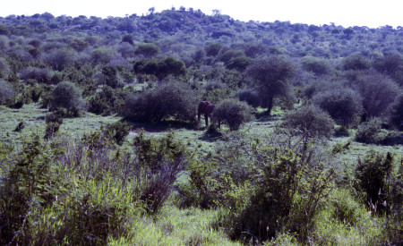 The dense and diverse vegetation in the red soil habitat at Mpala.