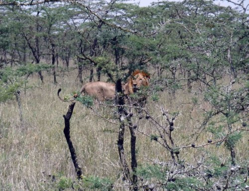 Ecology week 1: The carnivores of Mpala