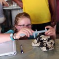 Maddie takes a careful measurement on the Paranthropus skull to later calculate cranial capacity.