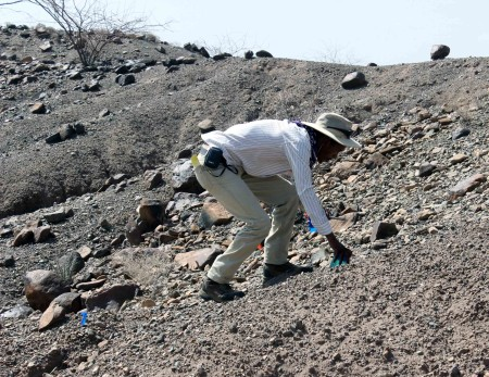 Yemane gets a closer look to distinguish naturally broken rocks from stone tools - a challenging task!