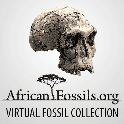 african-fossils