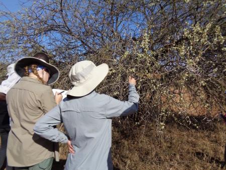 Carla examining (species?)