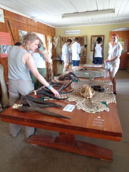 Natalie examining some bones on display