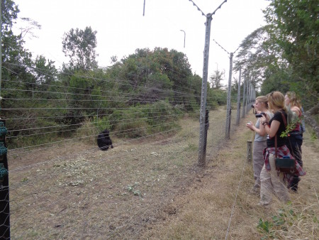 Students' first encounter with the chimpanzees!