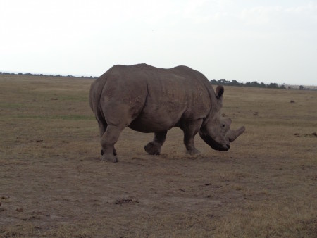Another white rhino!!