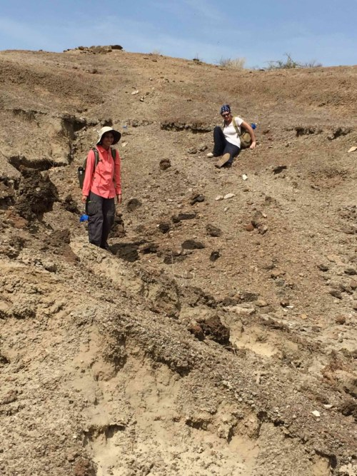 Carla and Natalie try to decide if these large broken fossil bones are worth flagging.