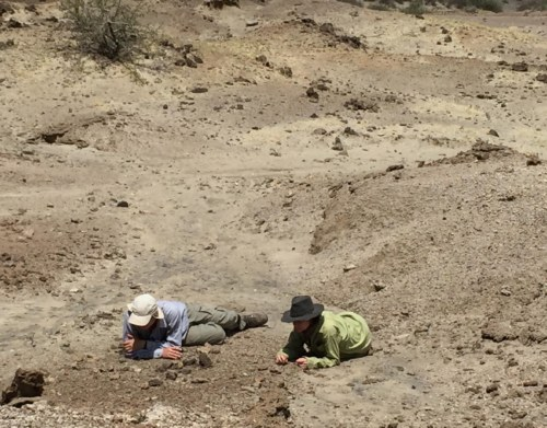 Mattia and Dr. Miller survey the area down hill from where Apolo found the tooth.