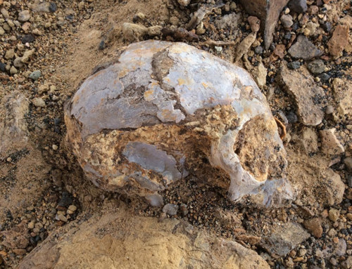 13 million-year-old infant ape skull discovered in the Turkana Basin