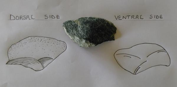 Stone tools and the Nariokotome camping trip