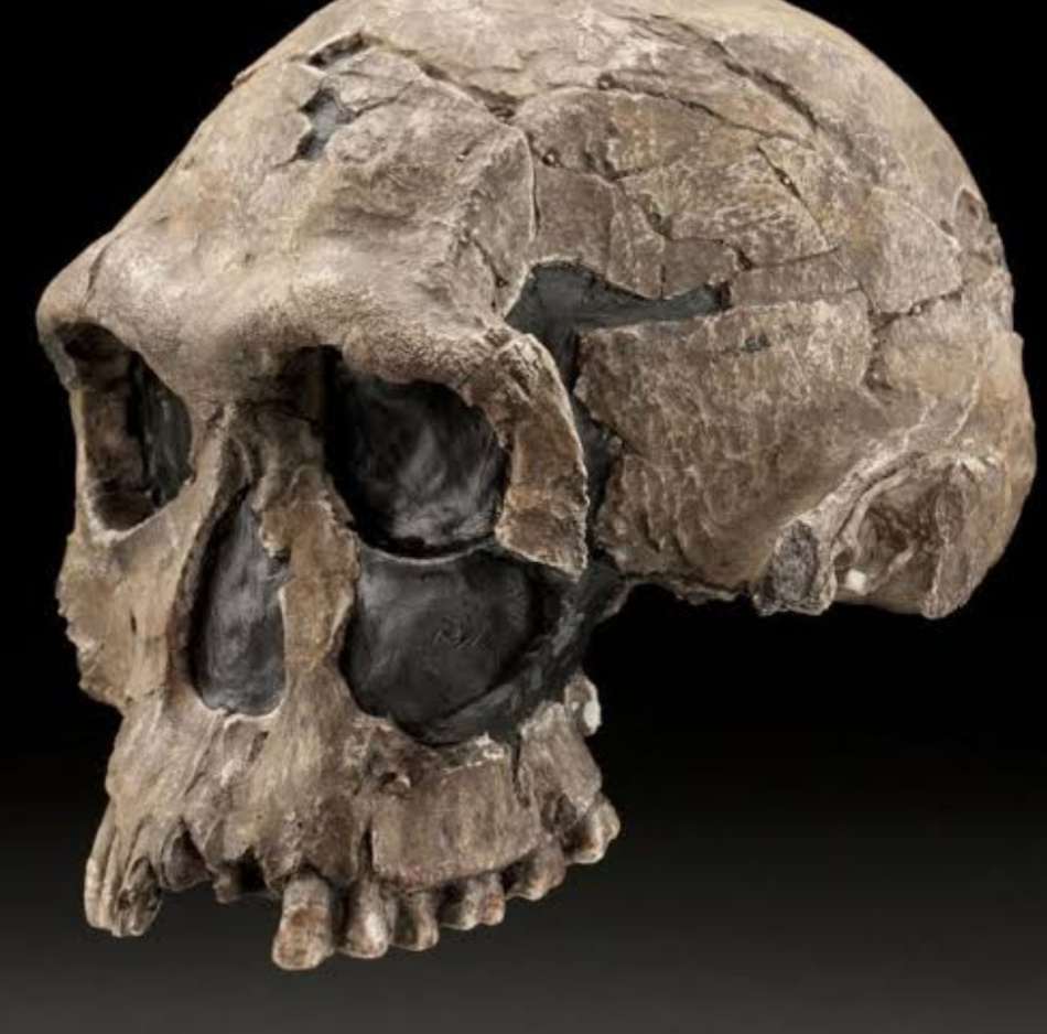 Understanding the evolution of our genus Homo